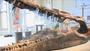 The Head of a Pliosaur
