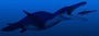 Artists Rendition of a Pliosaur