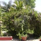 Garden - Photo 1298