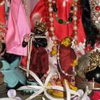 Radhastami and Vyasa Puja of Swami Narasingha - Photo 910