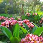 Garden - Photo 1205