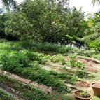Small organic vegetable garden