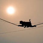 Monkey on Wires