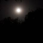 The Full Moon of Sri Gaura Purnima