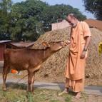 Visnu Maharaja Feeding Laddus to Laksmi