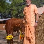 Visnu Maharaja with the Cows