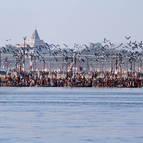Seagulls and Sadhus at the Sangam