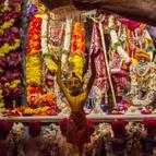 Bathing Mahaprabhu with a Sahasradhara