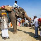 A Kumbha-Mela Elephant