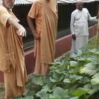 Visnu Maharaja Shows some of his vegetables to Guru Maharaja