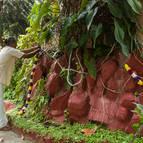 Decorating Govardhana Hill
