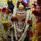 Mahaprabhu on the ratha